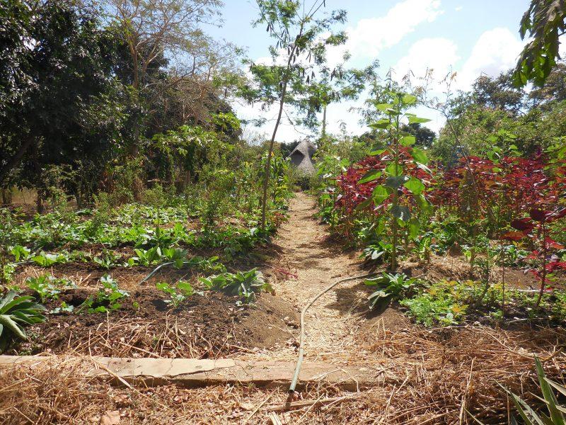 Kusamala: marktonderzoek in biologische landbouw